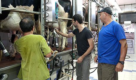 הרווח הגולמי של המחלבות מתמהיל המוצרים המפוקחים אמור לעמוד על 6%–12%, צילום: אוראל כהן