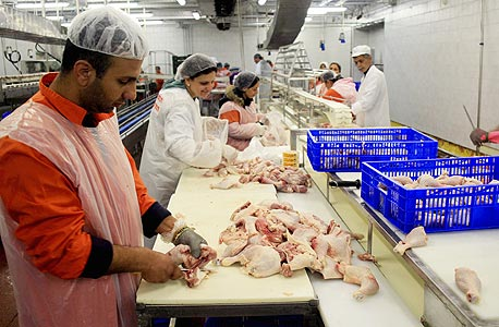 בקשה לייצוגית נגד חברות המזון: החדירו חומר רעיל לעופות