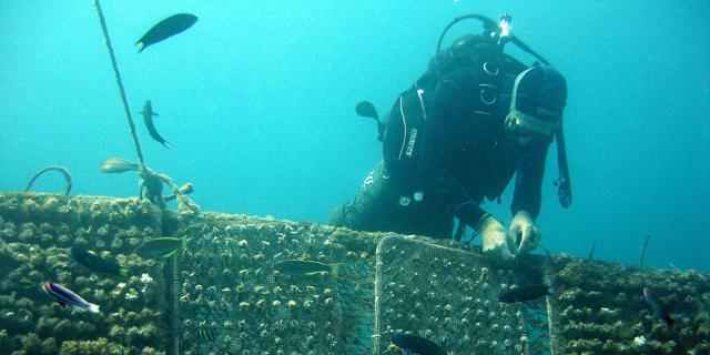 """כתב אישום חמור נגד קצא""""א: """"פעלה ללא היתר במפרץ אילת ופגעה ב-2,600 אלמוגים"""""""