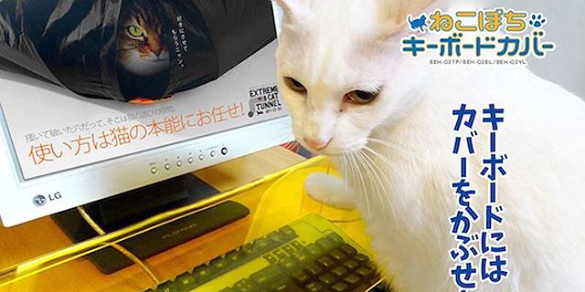 כך תמנעו מהחתול לשבת לכם על המקלדת
