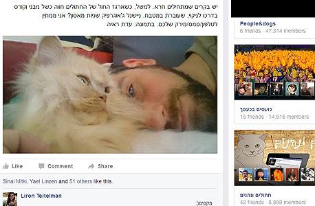 עוד חתולים FB פייסבוק קבוצות ישראל, צילום: פייסבוק