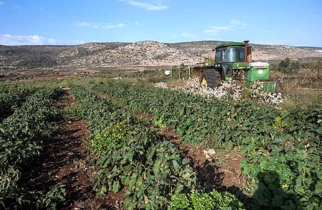 גידולים חקלאיים בארץ