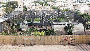 גינת הירק על גג דיזנגוף סנטר, צילום: תומי הרפז