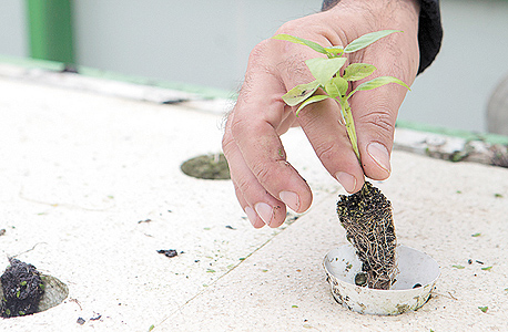 גידול הידרופוני של צמחי תבלין בתוך צינור. השיטה משתמשת ב־1%–15% מצריכת המים של החקלאות המסורתית