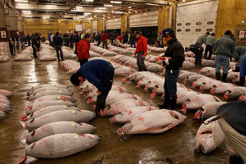 שוק הדגים, צילום: brycegroark