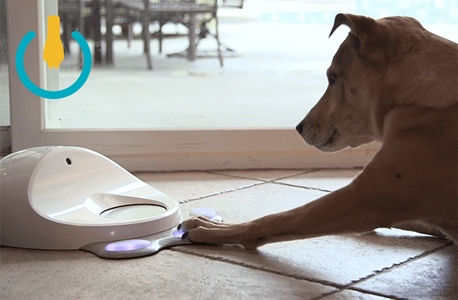 זה הזמן לבדוק אם הכלב שלכם באמת גאון, צילום: יצרן