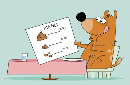 כלב. למה הוא אוכל קקי?