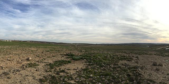 שדה בריר, צילום: אדם קפלן