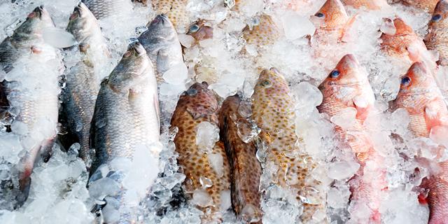 דגים קפואים, צילום: שאטרסטוק