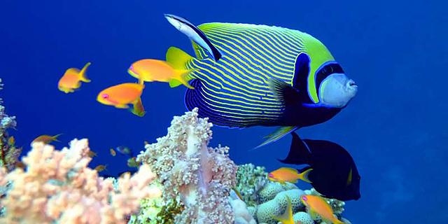 דגים, צילום: shutterstock
