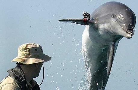 חייל בחיל הים האמריקאי מאמן דולפין, צילום: US Navy