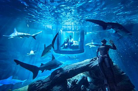 אקוואריום פריז AIRBNB כרישים 4, צילום: AIRBNB