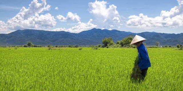 וייטנאם מותירה אבק לשווקים המתפתחים