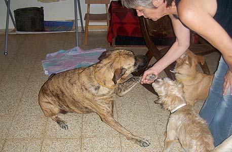 פנסיון לכלבים וחיות מחמד