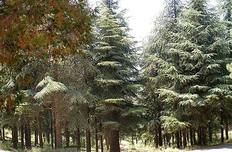"""""""אם נוכל לתכנת את העץ להיות יעיל פי עשרה, נצטרך פי עשרה פחות קרקע כדי להיפטר מהגז ולהפוך אותו לדלק ביולוגי"""", צילום: יפה רזיאל"""
