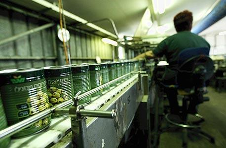 מפעל החמוצים בקבוצת יבנה