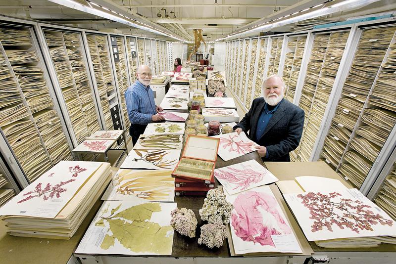 אצות וחוקריהן באוסף המחלקה לבוטניקה, צילום: Chip Clark