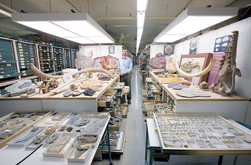 חלק קטן מאוסף המחלקה לחקר מאובנים, צילום: Chip Clark