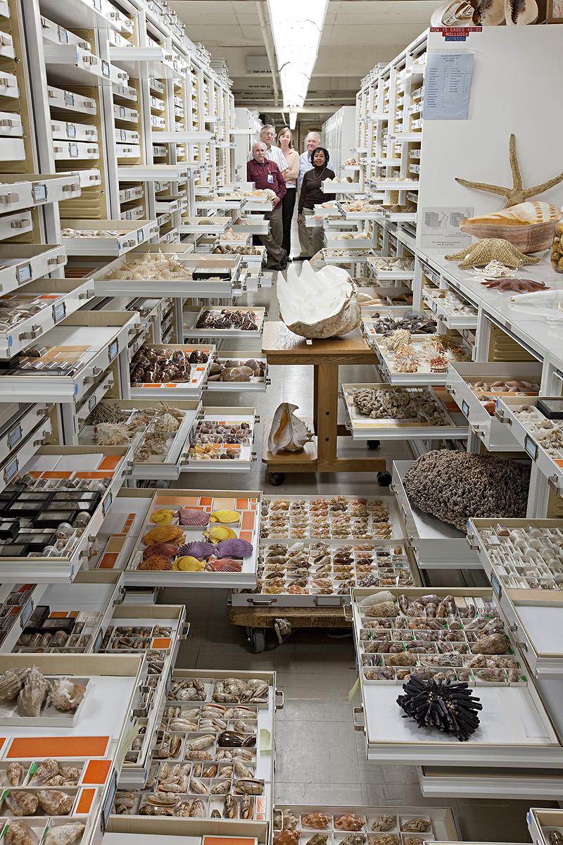 חלק מהפריטים באוסף המחלקה לחסרי חוליות, צילום: Chip Clark