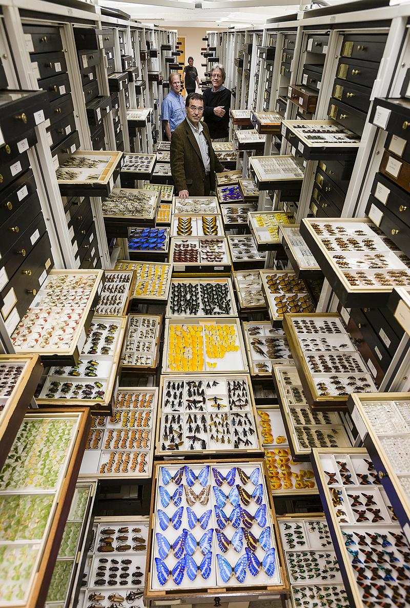 חרקים וחוקרים באוסף המחלקה לאנטומולוגיה, צילום: Chip Clark