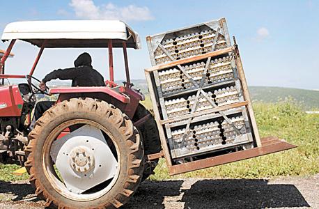 חקלאי מגדל ביצים בצפון, צילום: עמית שעל