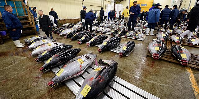 אין הרבה דגים בים