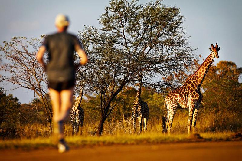 מרתון ביג פייב דרום אפריקה. לרוץ עם האריות