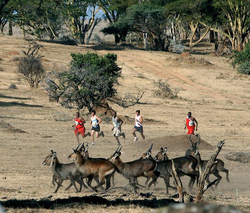 מרתון ספאריקום קניה. לרוץ עם הזברות והג