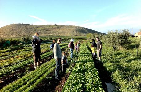 גיא אורגני בשדה אליעזר. פיתוח חקלאות אורגנית משפר את מצבם של העשירונים התחתונים, צילום: באדיבות גיא האורגני