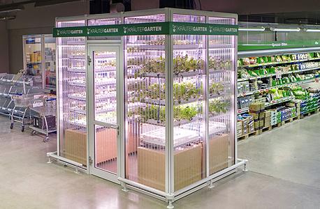 חממת הירקות של אינפארם בסופרמרקט