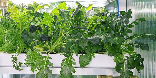 ישראלים מגדלים ירקות בסופרמרקט בברלין