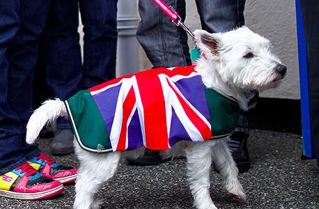 ברקזיט הצבעה כלב דגל בריטניה, צילום: רויטרס