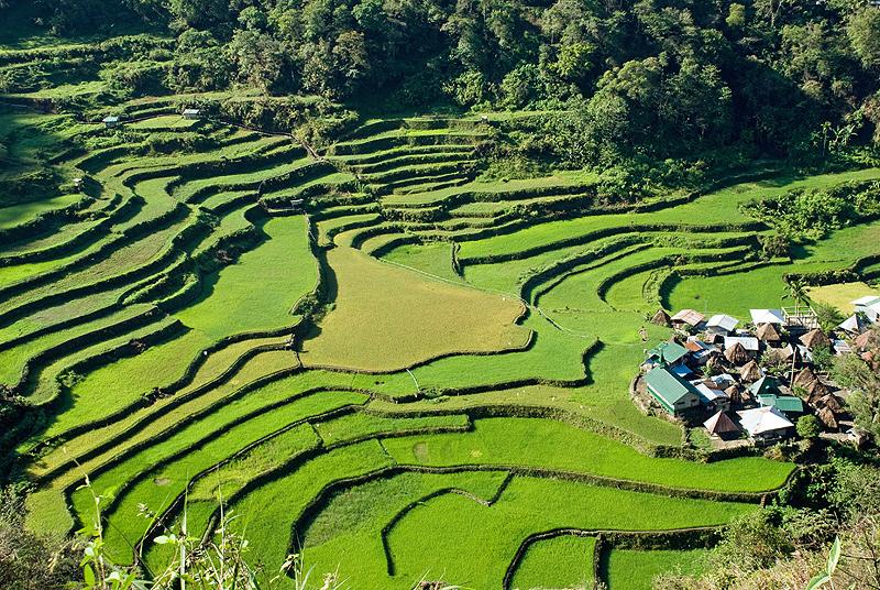 טרסות האורז בפיליפינים. פגיעות למזג האוויר