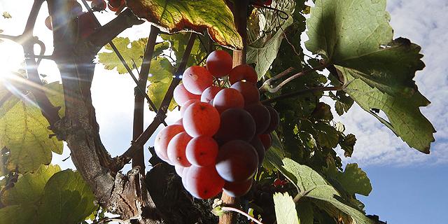 Precise Tree and Vine Irrigation Startup Saturas Raises $4 Million