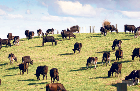 Cattle. Photo: Bloomberg
