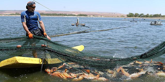 מחקר: רוצים לבלום את ההתחממות הגלובלית? תאכלו יותר דגים ושרימפס