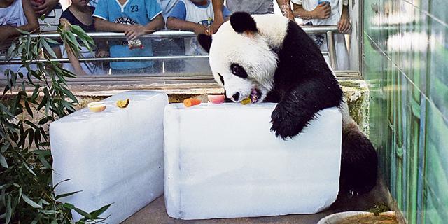 בייג'ינג, סין - שרדנו את מאו, מה זה כבר שלוליות מעופשות