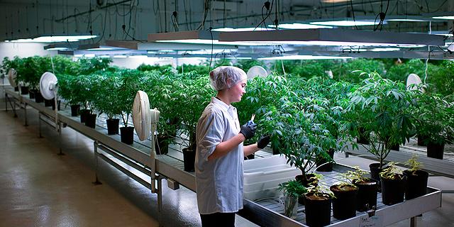 Israeli Cannabis Device Developer Kanabo to Set Up Marijuana Farm in Europe