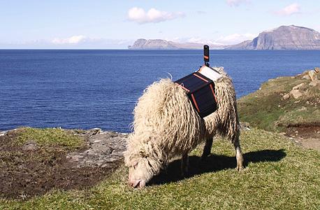 כבשים גוגל סטריט וויו איי פארו 1, צילום: google