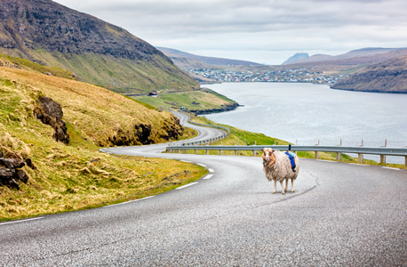 כבשים גוגל סטריט וויו איי פארו 2, צילום: google