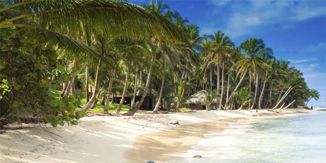 מלאי הקוקוס באיים הקאריביים הולך ואוזל