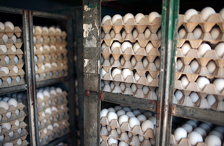 הוזלה לא מורגשת במחיר הביצים