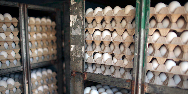 מגדלי העופות נגד החלטת משרד החקלאות להכפיל את המכסות ליבוא ביצי מאכל