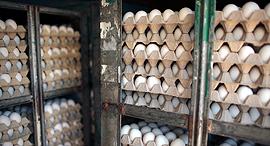 תבניות ביצים, צילום: עמית שעל