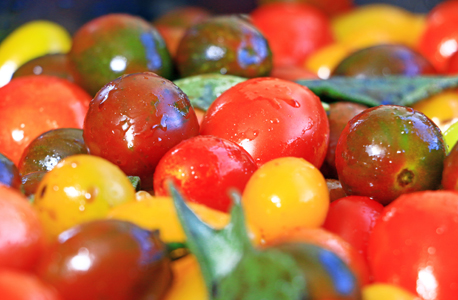 Cherry tomatoes (ilustration). Photo: Danna Kopel