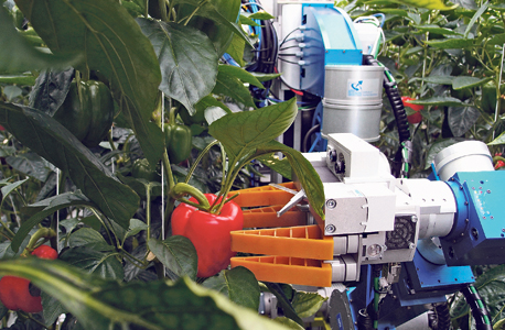 """הקוטף - Sweeper הוא רובוט שמורכב מזרוע מפרקית וקופסת מתכת שנראית כבעלת שתי עיניים ובה המצלמה, שאומדת את ריכוז הצבע האדום בפלפל וקובעת אם הוא בשל לקטיף. הרובוט מצויד ב""""אצבעות"""" או בעיגול מתכת לאחיזה בפרי ובסכין להפרדתו מהענף, צילום: Wageningen University & Research"""