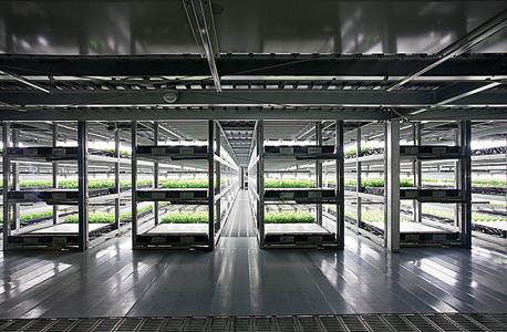 חוות חסות של חברת Spread ביפן. רובוטים מטפלים בכל שלבי הגידול של החסה, ללא מעורבות אנושית , צילום: איי אף פי