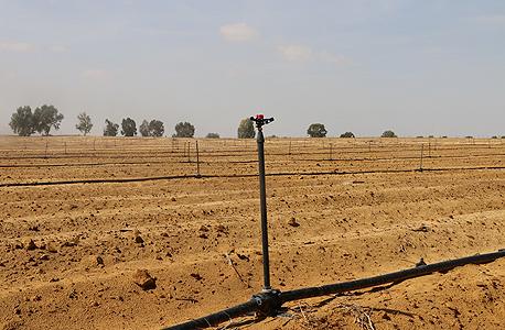 שדות בדרום הארץ, צילום: יובל רויטמן