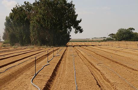 שדה בדרום הארץ (ארכיון). ישראל מערימה קשיים בעיקר בתחומי החקלאות, החשמל, התקשורת והתחבורה, צילום: יובל רויטמן