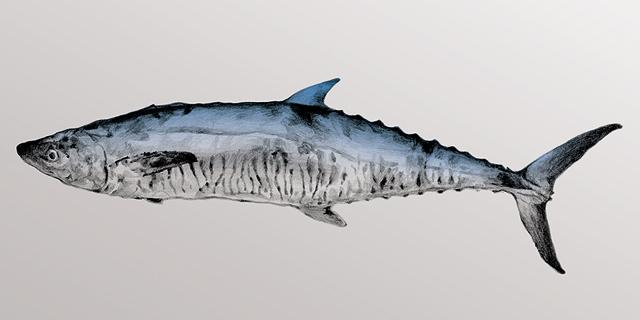 אוכל בזמן: פלמידה - אנדר דג